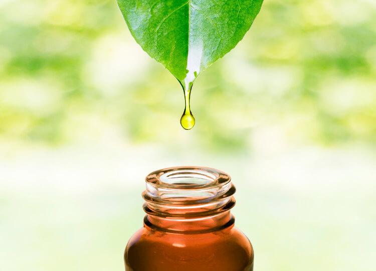 Çay Ağacı Yağının Tüm Faydaları -1
