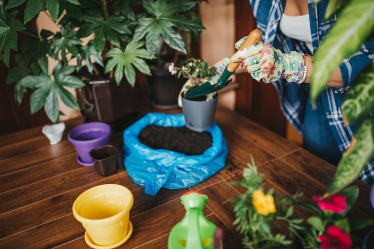İç Mekan Bitkileri ile Evinize Enerji Verin-2