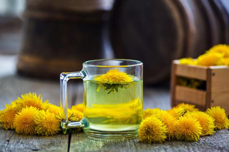 Karahindiba Çayının Az Bilinen Faydaları-1
