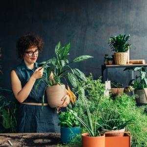 İç Mekan Bitkileri ile Evinize Enerji Verin